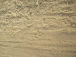3. Pawprints