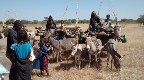 An ordinary day in the sahel for fulani people